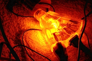 Glowing multi-plug extension cord